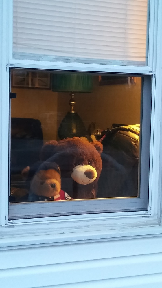 Hunt For Bear In Windows Cheers Local Kids During COVID-19 Scare