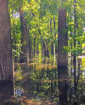 FloodplainAlongKankakee (1).jpeg