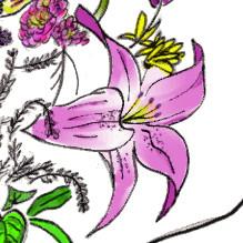 badeeflowersCU2.jpg