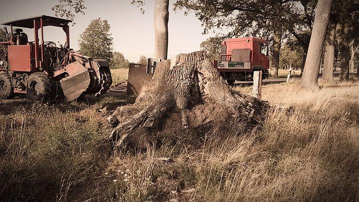 Baumwurzelfräsen | Stubbenfräsen