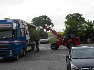 Neuanpflanzung Baumpflanzen
