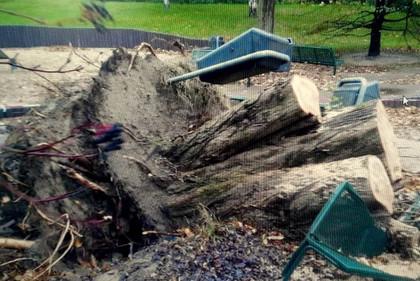 Sturmschäden beseitigen