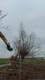 Astkneifer Baumpflege