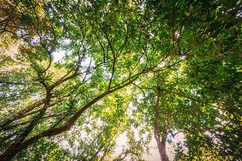 Árvore da Saúde