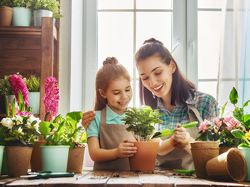 Horta em Casa: veja como começar a sua!