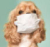 Dog mask.jpg