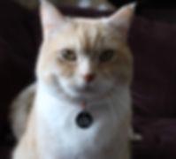 Kopplin - Louie (best cat).jpg