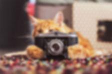 Cat Camera.jpg
