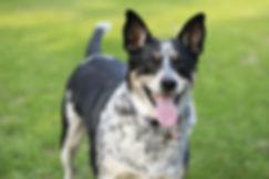 Hansen - Spot (Best Dog).jpg