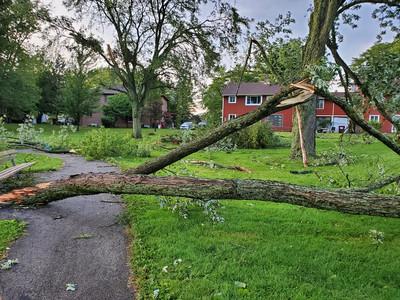 broken tree limbs