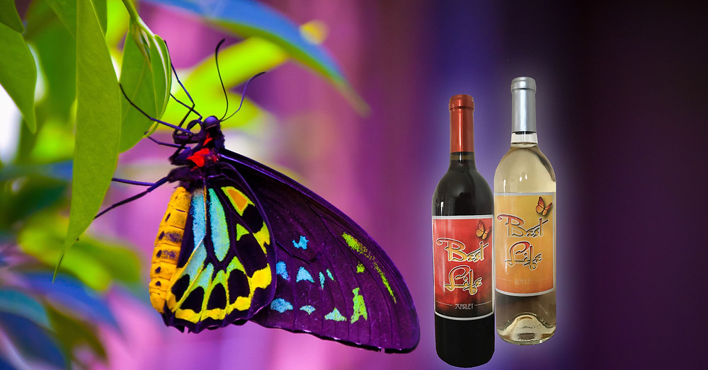 wine with butterfly