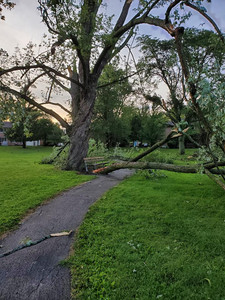 tree damage after storm