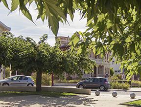 Les arbres et le domaine public