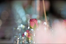 Flower, Roses, Wedding, Photographers Jeffreys bay