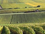 montgueux vignes.jpg