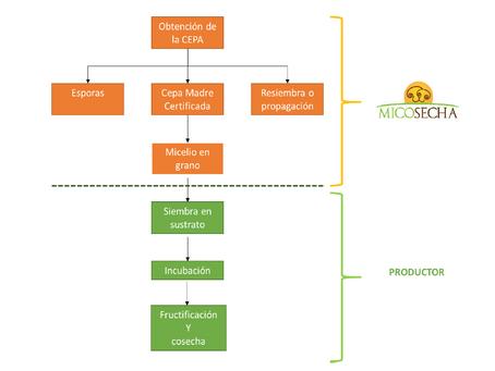 Parte II: Comenzar a cultivar hongos a escala comercial - Los 6 pasos.