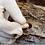 Thumbnail: Micelio en grano de Shiitake - 2 Kilos