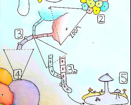 ¿Cuál es la diferencia entre un cultivo de hongos hecho con esporas y uno hecho con micelio clonado?