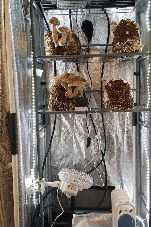Kit Indoor Para Cultivo De Hongos 3 tamaños