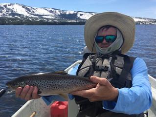 Snake River Angler Fly Fishing Report for June 10th, 2017