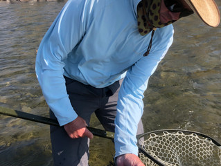 Latest Reports for the the Snake and the South Fork
