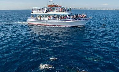 whale watching poic.jpg