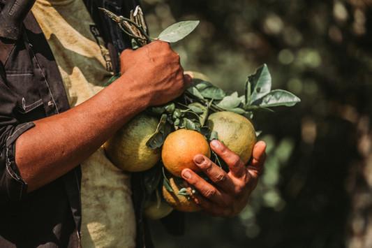 Orange Farm Content