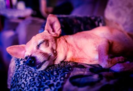 Tiki the Wonderdog