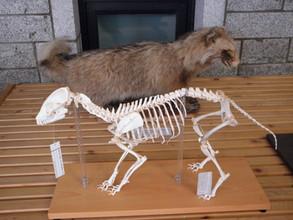 포유류연구회(표본전시)