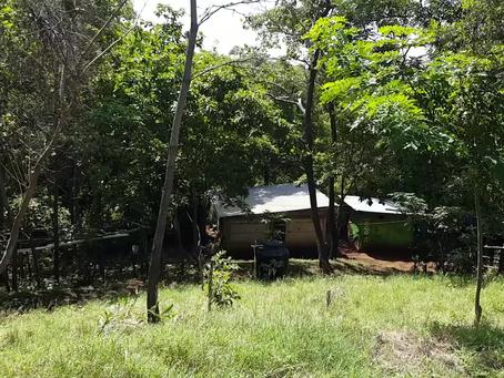 Chico  lukee vuonna 2019 istutettujen puiden kyltit.