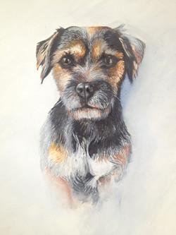 Benji - Border Terrier