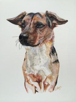 Benji - Terrier