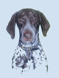 Dinky - German Shorthaired Pointer