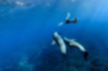 御蔵島のイルカと高縄奈々