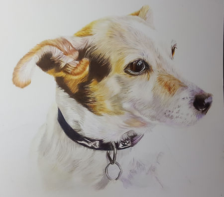 coloured pencil pet portrait commission of a dog