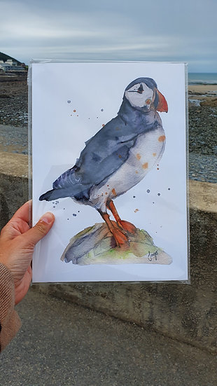Puffin on a Rock North Devon Art Print