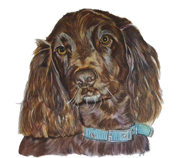 watercolour pet portrait commission painting of spaniel