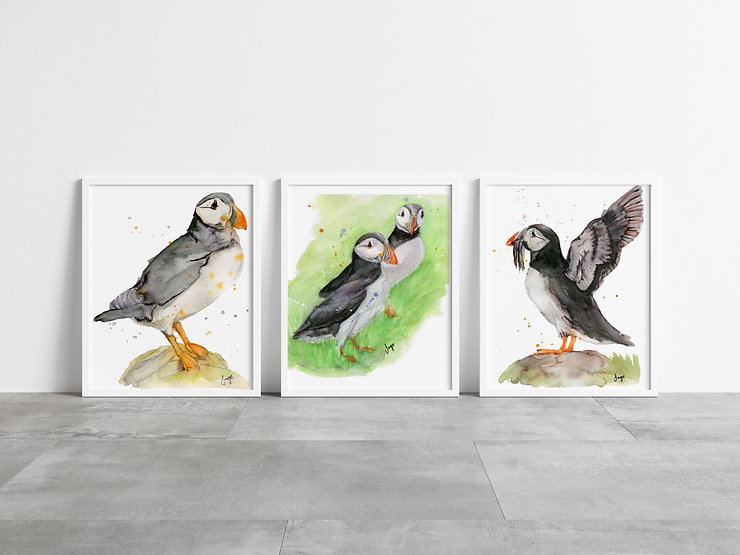 Three framed Puffin art prints
