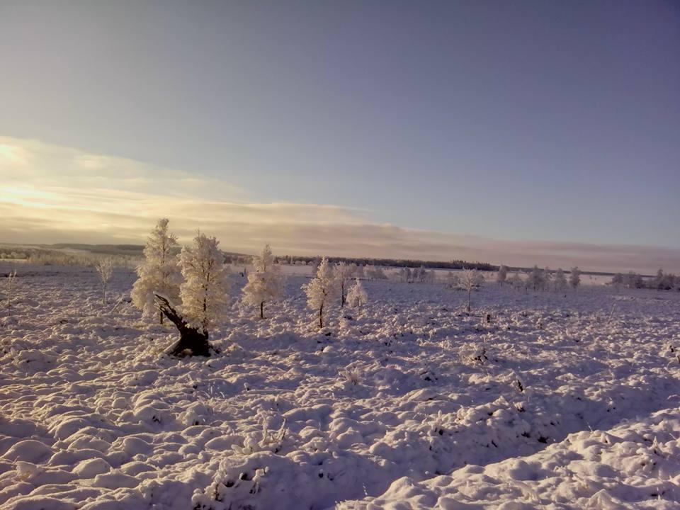 hautes fagnes snow winter