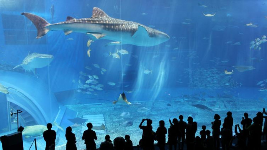 1Day Okinawa Churaumi Aquarium, Kourijima, Cape Manza & Nago Pineapple Par