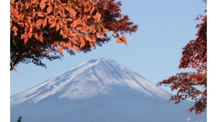 Fuji's Best Autumn Leaf Spots Tour plus All-you-can-eat Grape Picking