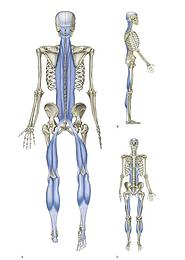 Anatomía fascitis