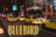 Bluebird logo -- temporary-1.jpg