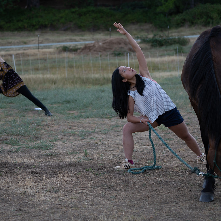 Guided Yoga & Meditation with Horses