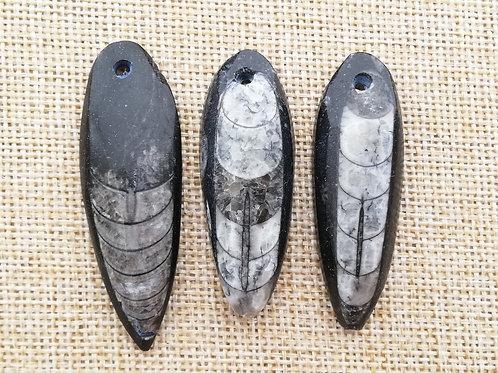 Fósil de Orthoceras pequeño