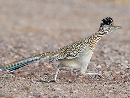 WHAT DO THE ROAD RUNNER AND BUSINESS TRANSPARENCY HAVE IN COMMON?