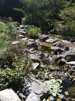 Aquatic plants and native stones