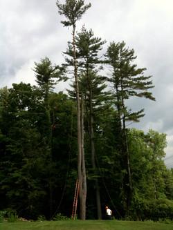 tree take down