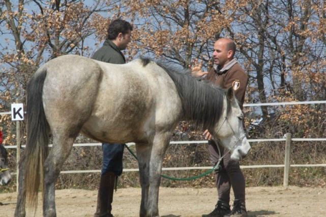 equitation-ethologique-3