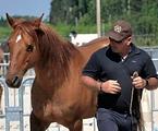 La Louvière des cours techniques d'équitation